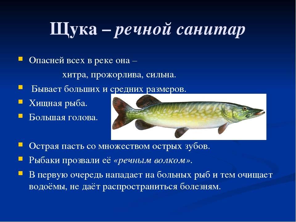 Строение и образ жизни рыб