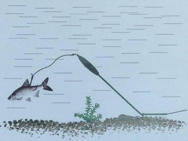 Донка на судака: оснастка, ловля на течении на живца