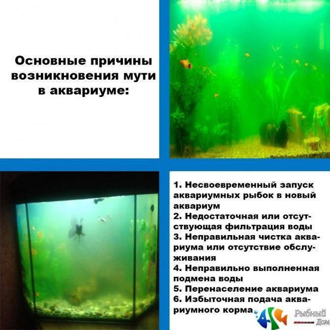 Почему мутнеет вода в аквариуме: причины и методы борьбы