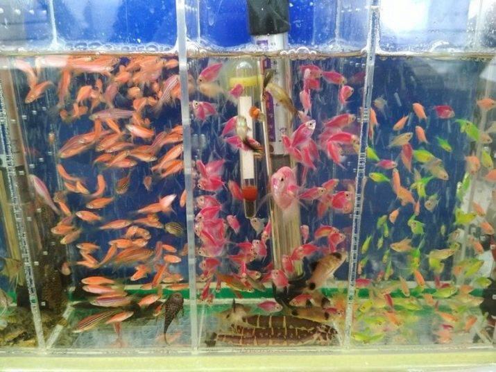 Бизнес-план на разведении аквариумных рыбок: разведение, оборудование, расходы, доход, реклама и продажа