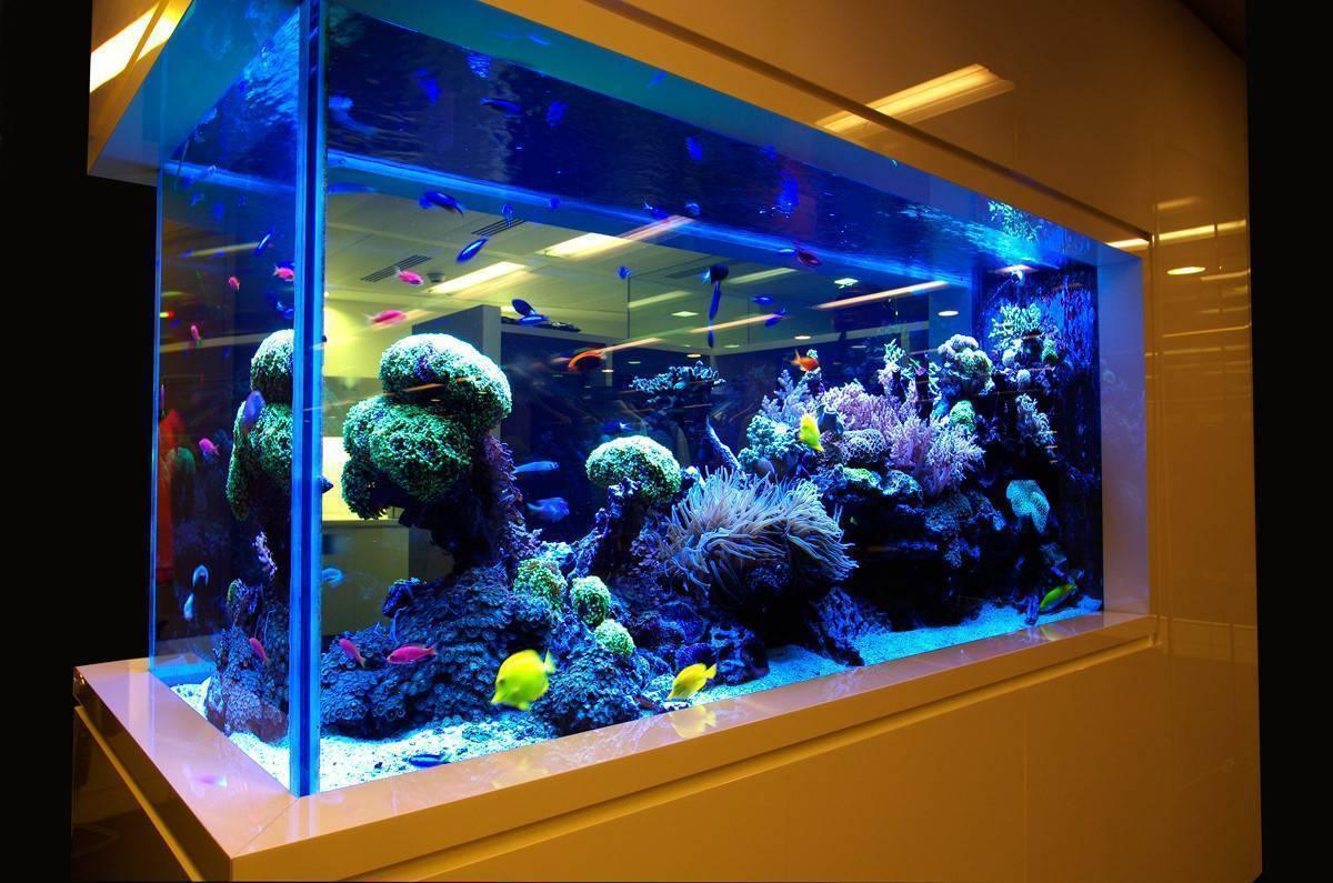 16 лучших аквариумных рыбок - рейтинг 2020