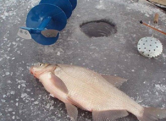 Ловля леща весной и летом: приемы, хитрости, оснастка – рыбалке.нет