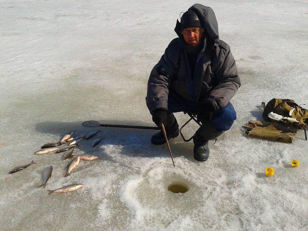 Особенности ловли плотвы зимой - тактика, снасти и приманки | berlogakarelia.ru