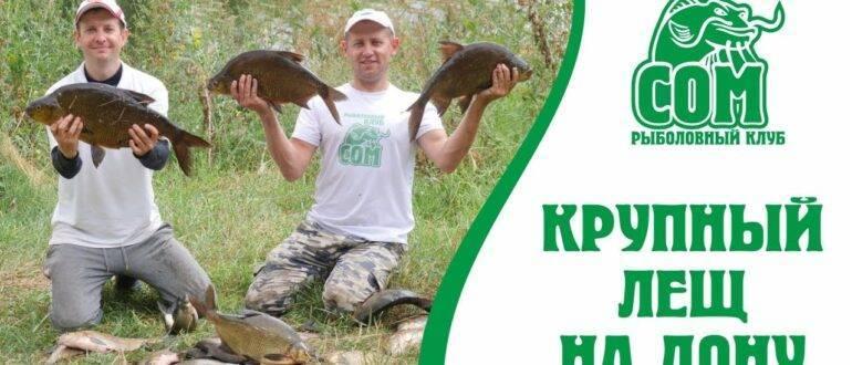 Ловля рыбы спиннингом в октябре