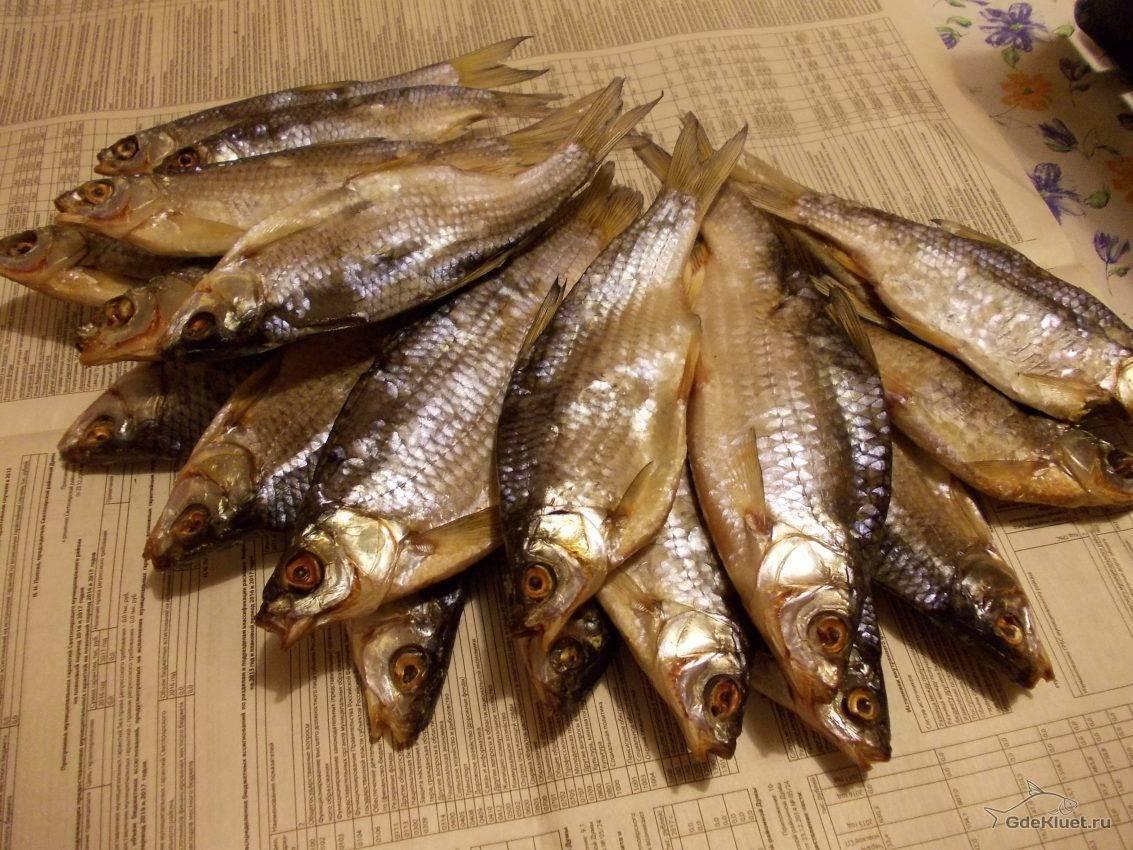 Рыба вобла: фото и описание