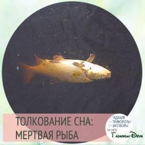 К чему снится рыба женщине - значения по соннику