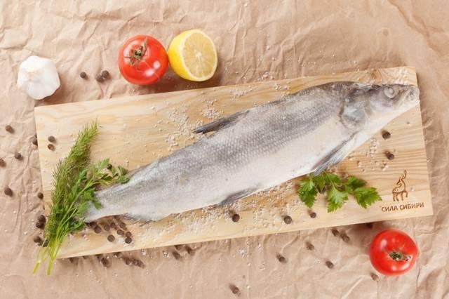Рыба муксун фото и описание   где водится и как выглядит
