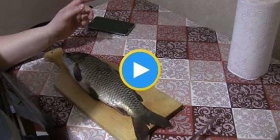 Как правильно очистить рыбу от чешуи