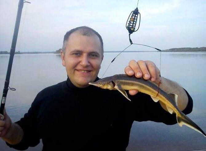 На что ловить осетра — особенности рыбалки, на какие приманки клюет