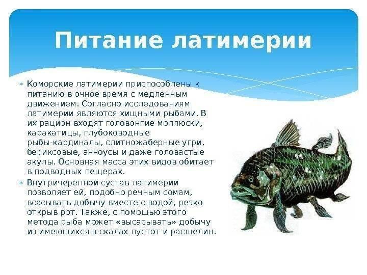 Рыба-меч - особенности, фото, интересные факты о рыбе!