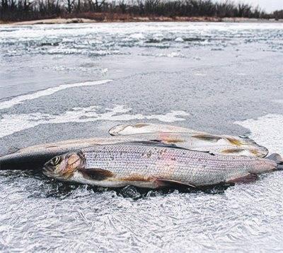 Рыбалка в оренбургской области (56) | карта рыболовных мест