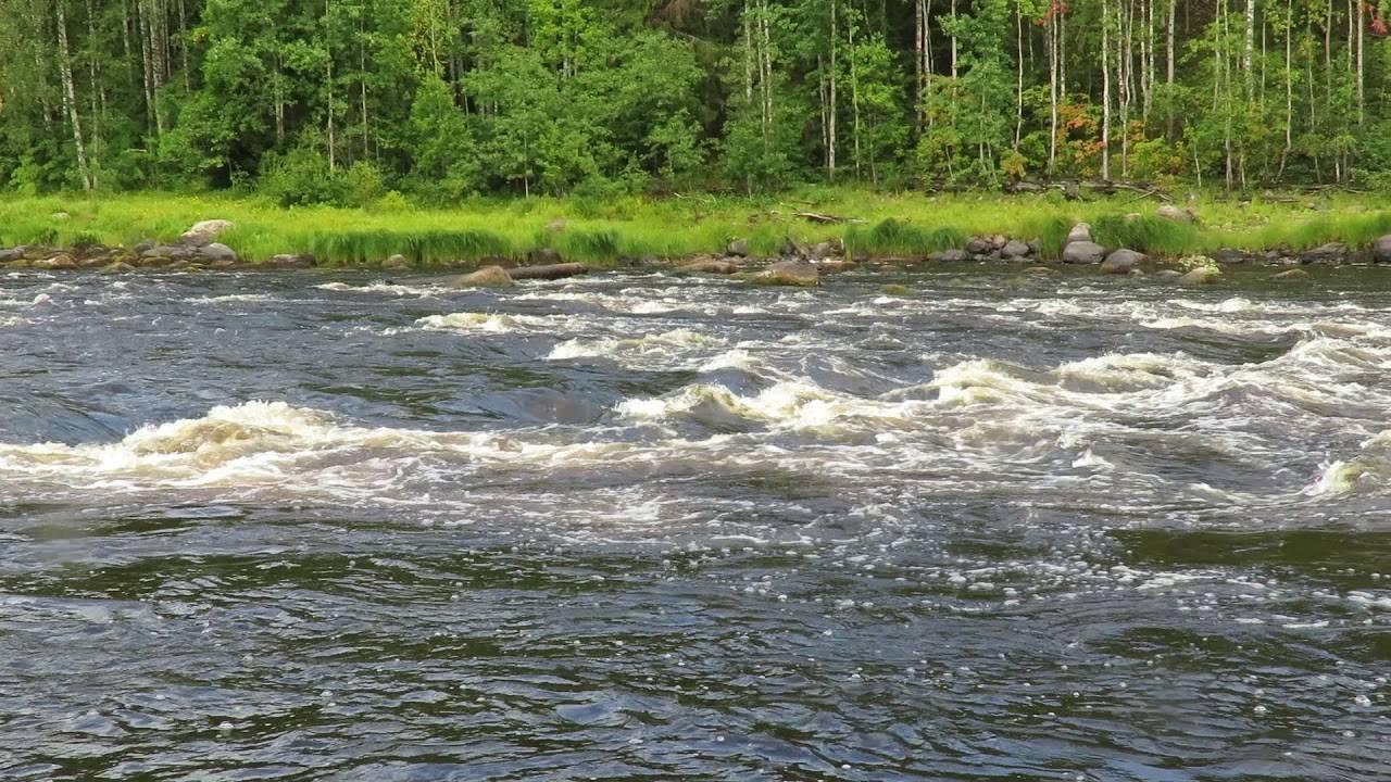 Река шуя в карелии - где находится, куда впадает, пороги