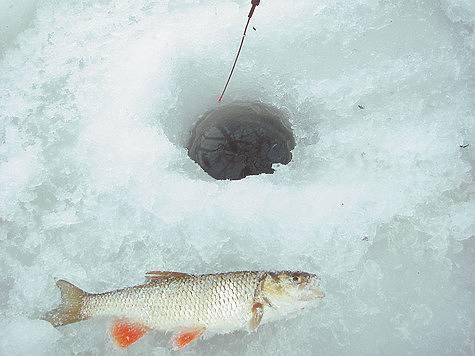 Ловля голавля зимой: особенности рыбалки на мормышку