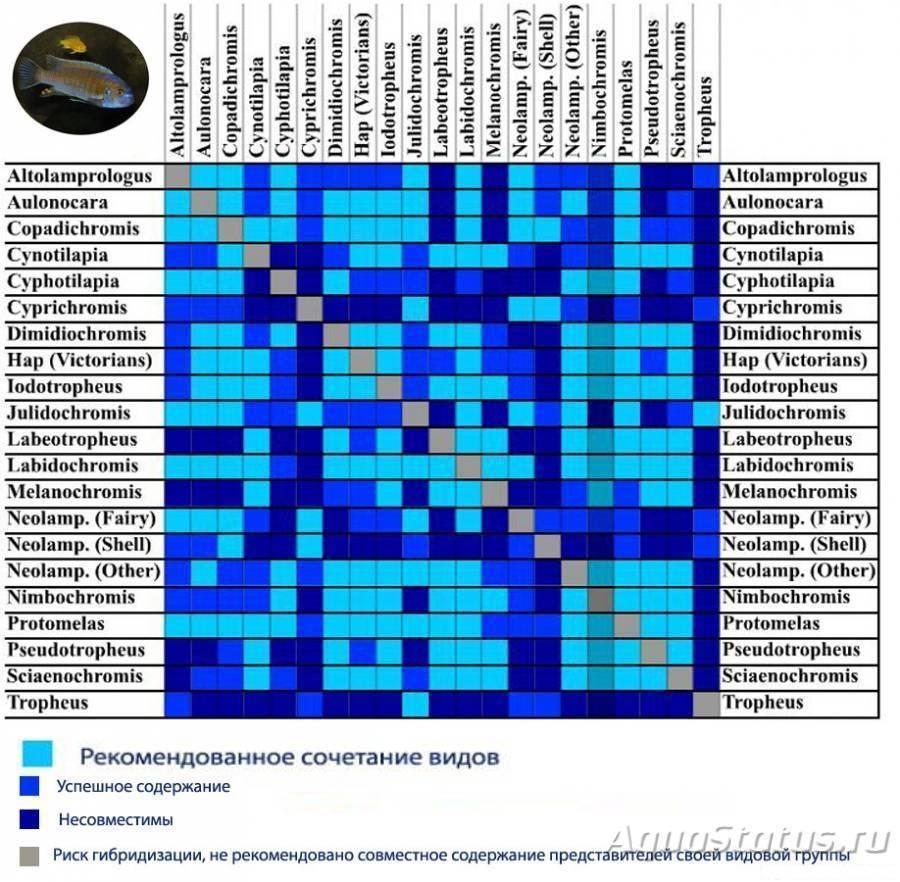 Совместимость барбусов с другими рыбами (23 фото): с кем они уживаются в аквариуме? с какими рыбками содержание суматранских барбусов нежелательно?