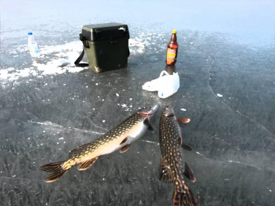 Прогноз клёва рыбы в городе полоцк