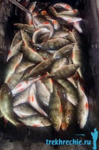 Рыбалка на ахтубе: видео, выбор снастей и приманок, какая рыба водится