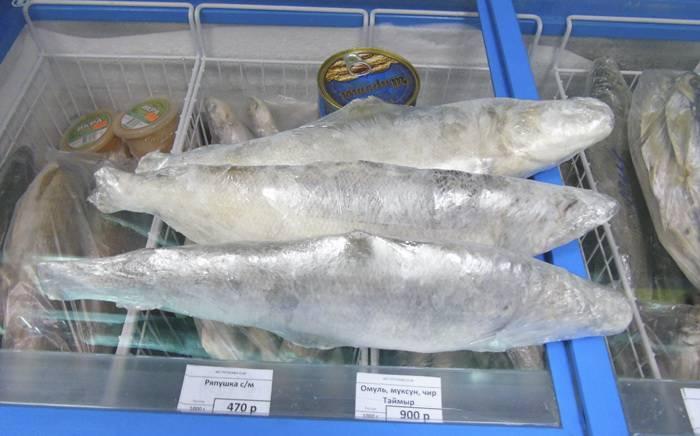 Рыба муксун (50 фото): где водится, полезные свойства, как ловить, приманки, меры предосторожности, видео