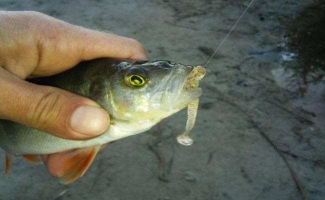 Рыбалка на спиннинг | спиннинг клаб - советы для начинающих рыбаков сплит шот - монтаж оснастки и техника ловли