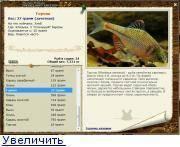 Рыба голец – достойный представитель семейства лососевых