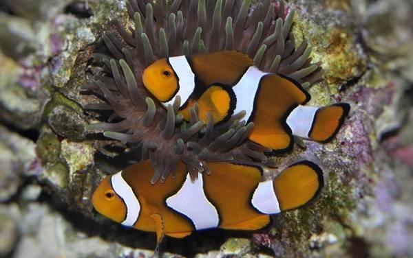 Рыбы красного моря