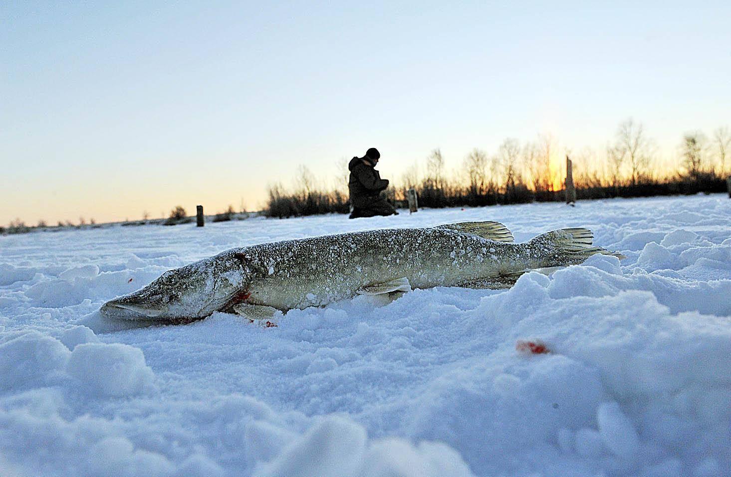 Рыбалка в самарской области. карта рыболовных мест… - рыбалка