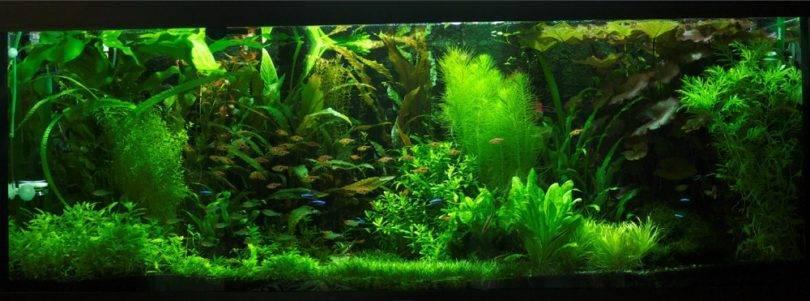 Грунт для растений в аквариуме: какой лучше выбрать для травника, толщина субстрата для растительного мира и что еще нужно живым рыбкам