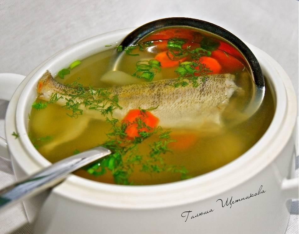 Сварить уху из форели. рыбный суп из головы форели. что необходимо заготовить