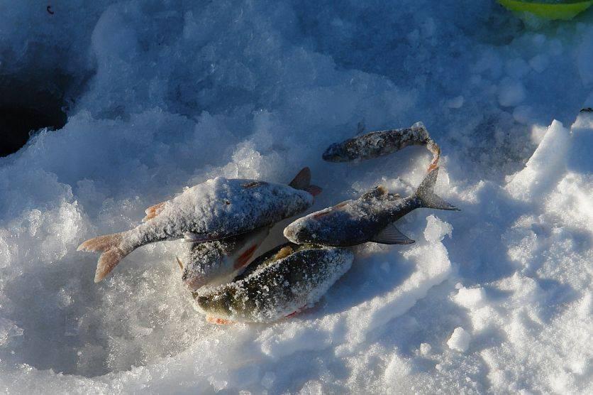 Прогноз клёва рыбы в городе старый оскол
