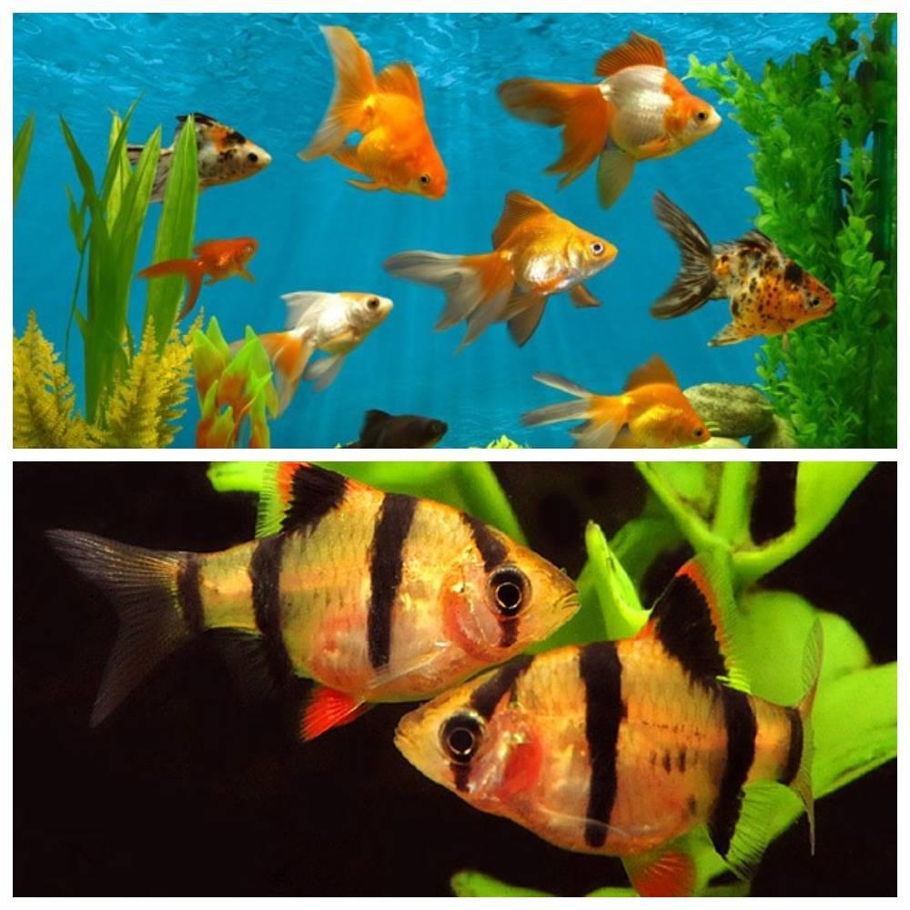 Обитатели аквариума: виды и советы по выбору