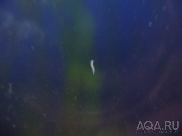Кто завелся в аквариуме: опознание, фото, как избавиться и бороться?