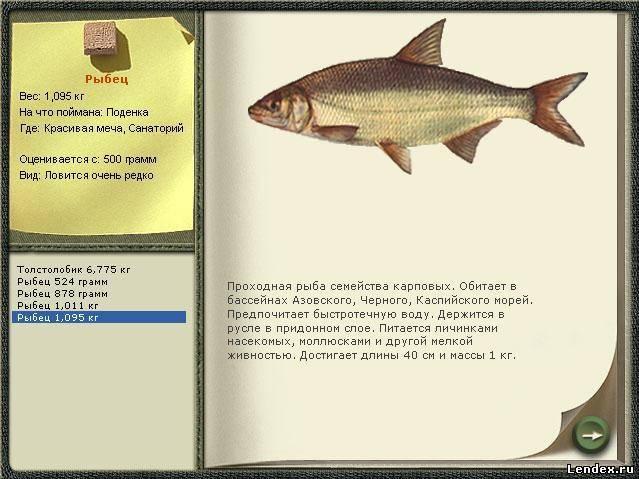 Снасти для ужения рыб и рачницы. любительское рыболовство [с иллюстрациями]