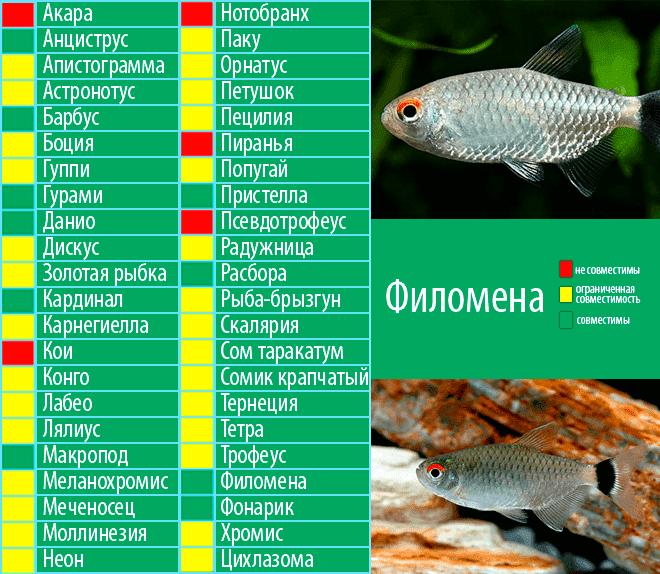 Совместимость аквариумных рыбок: какие рыбки могут жить в одном аквариуме, таблица совместимости, принцип совместимости, кто с кем уживается, ошибки