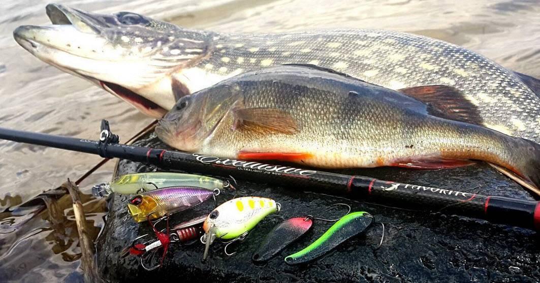 Ловля щуки весной на спиннинг: когда клюет, приманки для рыбалки в апреле
