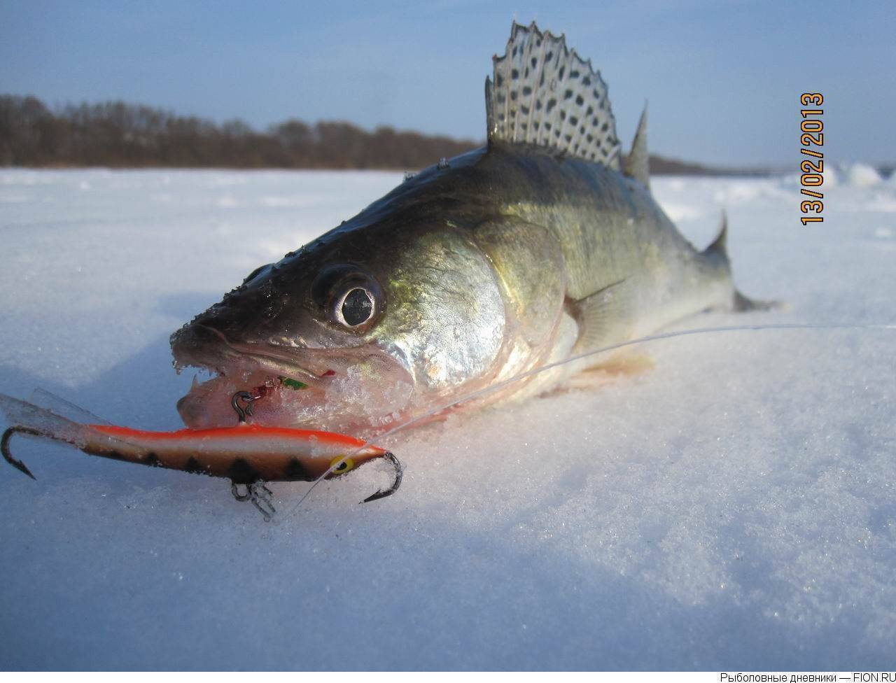 Балансир на судака: (как ловить судака зимой, топ-5 балансиров)