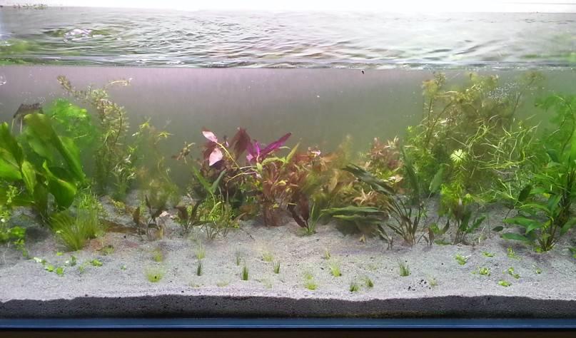 Вода для аквариума: как подготовить жидкость для рыбок в домашних условиях, какая должна быть для морских обитателей и что делать с пузырьками и другими проблемами