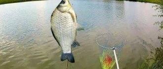 Рыбалка в рубцовске и его окрестностях