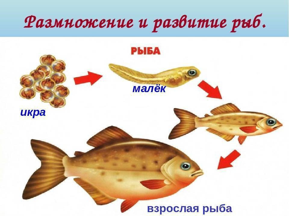 Корм для рыб: виды, состав и режимы кормления