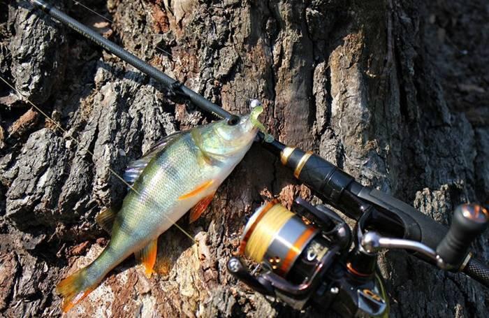 Как правильно собрать спиннинг на щуку: для начинающих и опытных рыболовов