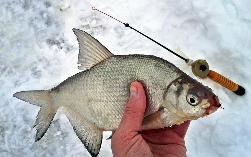 Ловля леща в феврале - читайте на сatcher.fish