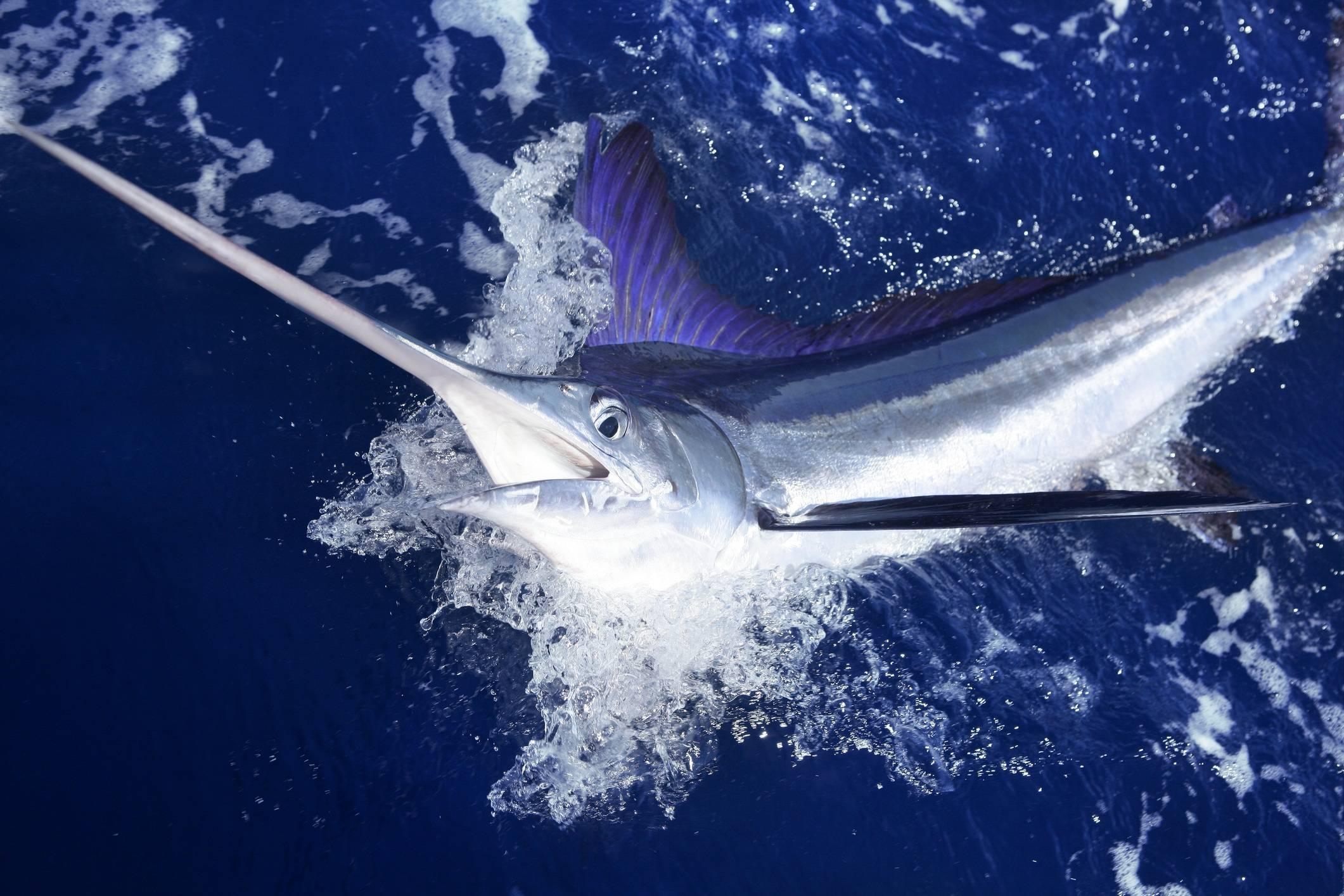 Белая рыба горячего и холодного копчения: виды, названия, какую выбрать для приготовления