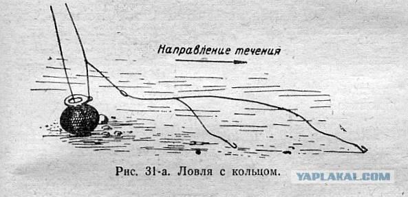 Ловля леща на кольцо с лодки