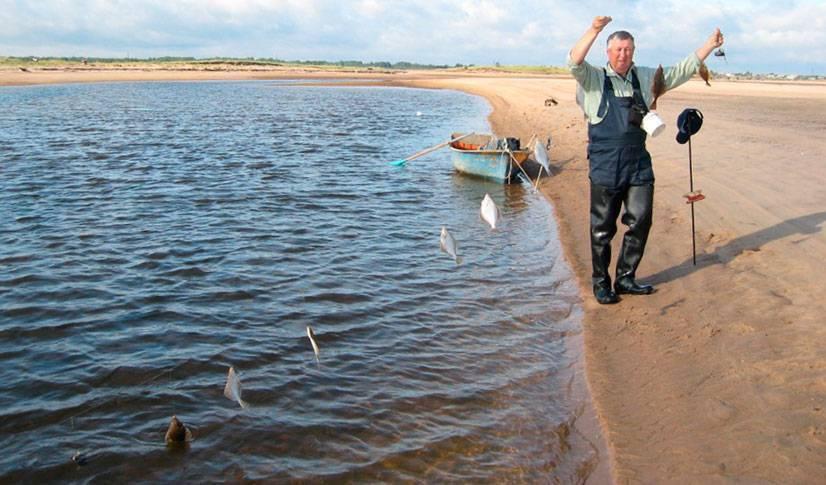 Камбала — отличительные особенности, среда обитания и рыбалка