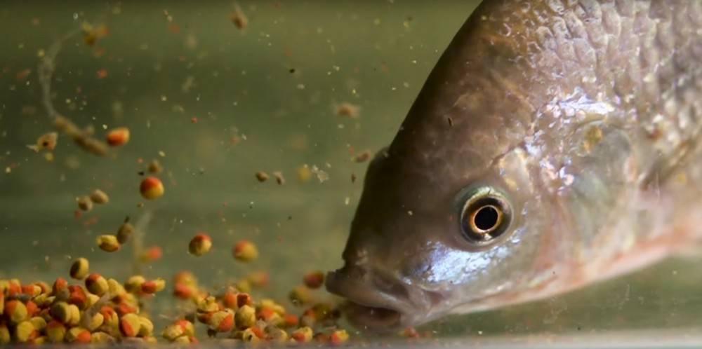 Как разводить рыбу в маленьком пруду на дачном участке