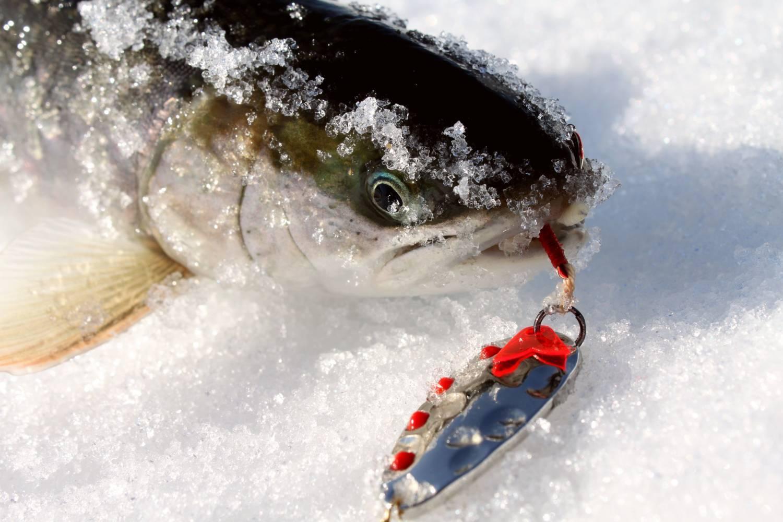 Как вытащить рыболовный крючок из пальца, обработка раны
