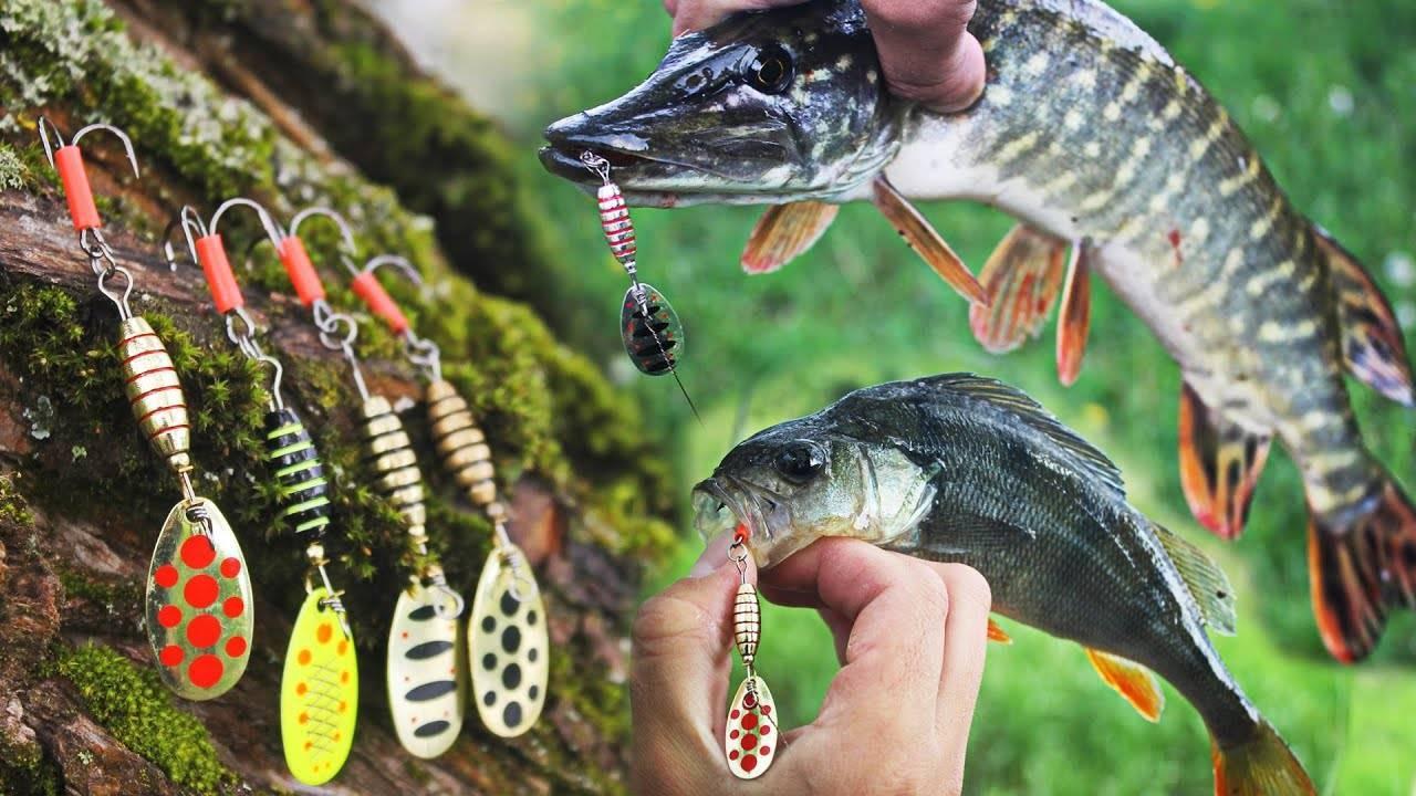 Ловля щуки на спиннинг: простые советы начинающим