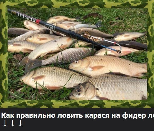 Как насадить опарыша на крючок так, чтоб рыбам нравилось