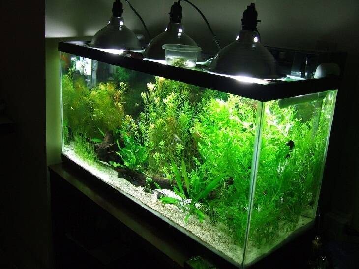 Освещение аквариума светодиодными лампами своими руками