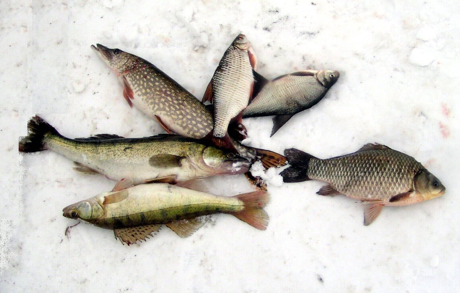 Рыбалка на яузском водохранилище: карта рыбных мест, какая рыба водится