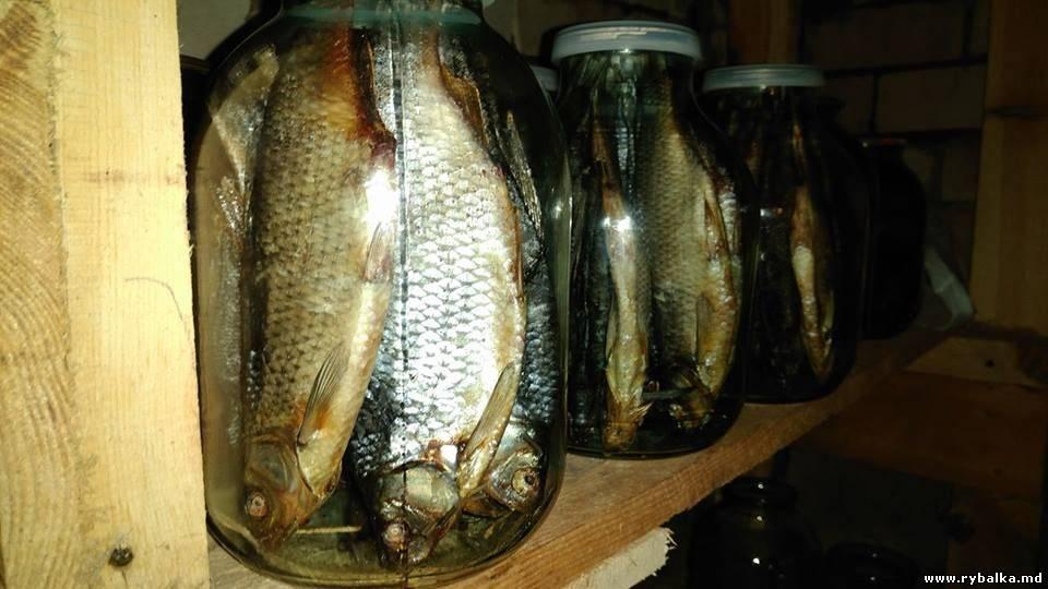 Как и где правильно хранить вяленую рыбу в домашних условиях