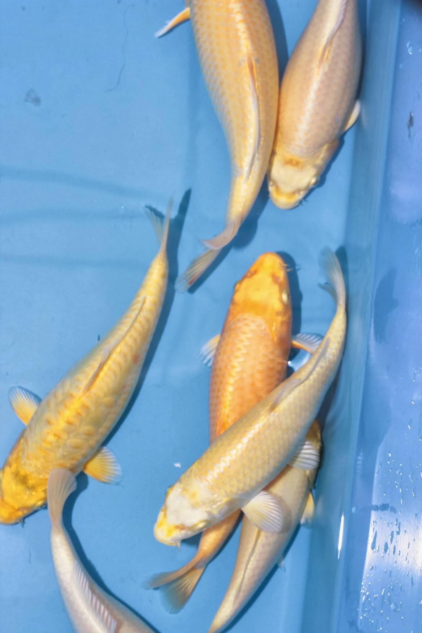 Бизнес по разведению рыбы – как организовать прибыльную рыбную ферму